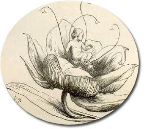 Pulgarcita nace de Thomas Vilhelm Pedersen