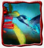 Colibri_2